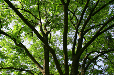 Tree_woods_beiz_jp_s02697