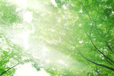 Tree_woods_beiz_jp_s04864