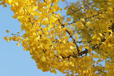 Autumn_beiz_jp_p07432