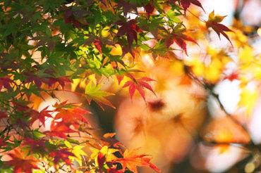 Autumnleaves_beiz_jp_p07538
